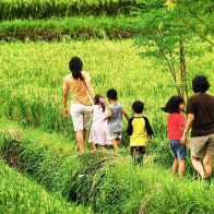 explore rice paddies with your family